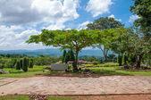Big trees in the garden. — Stock Photo