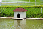 House for the ducks and bird — Stock Photo