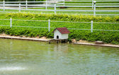 House for the Ducks. — Stock Photo