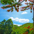 HDR image mountain with trees — Stock Photo