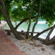 Bench Tree on a sandy beach — Stock Photo