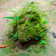 Moss growing on ground In forest — Stock Photo