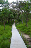 Pathway in the forest at national park — Stock Photo