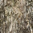 Old wood tree texture for background — Stock Photo