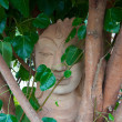 Head of Sandstone Buddha in The Tree Roots — Foto Stock