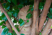 Head of Sandstone Buddha in The Tree Roots — Stock Photo