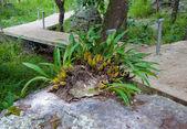 Dzikich orchidei roślin na skałach — Zdjęcie stockowe