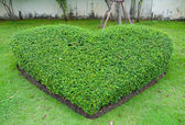 Decorate garden is a green heart — Stock Photo