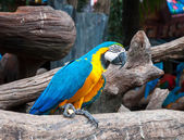 Parrot macaw beautiful colors — Photo