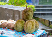 Durian tropical fruits thailand — Stock Photo