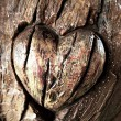 Carvings heart on tree trunk — Stock Photo #39425985