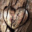 Carvings heart on tree trunk — Stock Photo