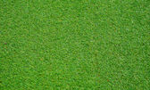 Green grass of texture for background. — ストック写真