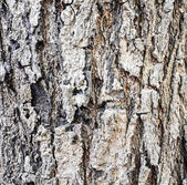 Ağaç doku — Stok fotoğraf