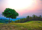 Alone tree on the mountain meadow at sunset. — Stock Photo
