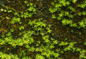 Stone overgrown with green moss in forest — Stock Photo
