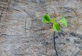 Plant growing on tree stump — Stok fotoğraf