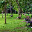 Benches in beautiful green park — Stock Photo #39811985
