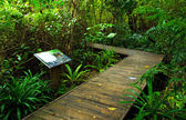 Wooden bridge pathway in the forest at national park — Photo