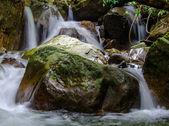 Cascada en la profunda selva selva. — Foto de Stock