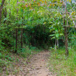 Stock Photo: Walking trail in tropical forest