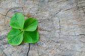 Plant growing on tree stump — Stock Photo