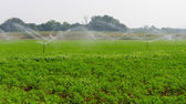 Morning view of a hand line sprinkler system in a farm field — Stock Photo