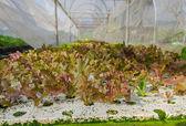 Organic vegetable plots cultivation farm — Stock Photo