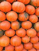 Pumpkin on ground with dry straw — Stock Photo