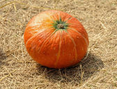 Pumpkin on ground with dry straw — Stock Photo
