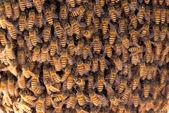 Muchas abejas de traer la miel en panal. — Foto de Stock