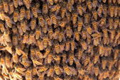 Many bees of bringing honey on honeycomb — Stock Photo