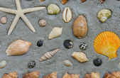 Starfish and shells to decorate on cement wall — Stok fotoğraf