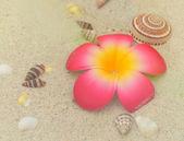 Plumeria and seashells on white sand — Stock Photo
