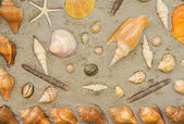 Starfish and shells to decorate on cement wall — Stock Photo