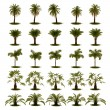 3D Set of Palm Tree - Stock Photo