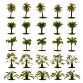 3D Set of Palm Tree — Stockfoto