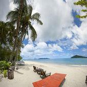Beach with palm — Stock Photo