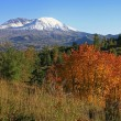 Mt. St. Helens with fall colors — Stock Photo #33667173