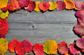 A Frame of autumn leafs. — Stock Photo
