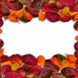 Fall leaves border on white. — Stock Photo