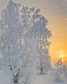 Magic colors of the winter evening.  — Zdjęcie stockowe