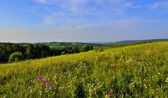 Panoramic view of beautiful summer landscape — Stock Photo