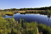 Peat lake — Stock Photo