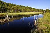Lac de tourbe — Photo