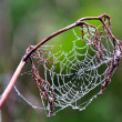 Spiderweb — Stock Photo #40511415