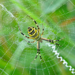 Spider in her spiderweb — Stock Photo #40511543