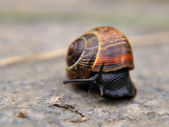 Snail on concrete — Stock Photo