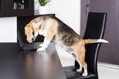 Pies za pomocą komputera — Zdjęcie stockowe