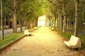 Park ağaç ve banklar — Stok fotoğraf